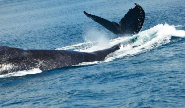 costa rica whales and dolphins watch tours and sightseeing, la mariposa hotel in manuel antonio, quepos 3