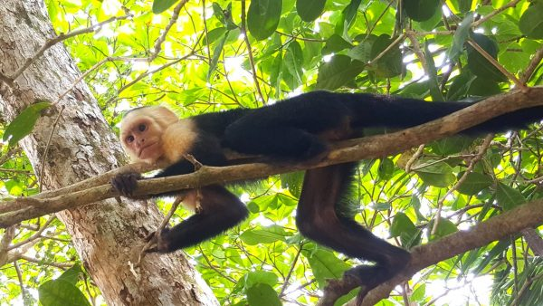 hotel la mariposa-manuel antonio-costa rica-national park-nature tour-hiking-tour-beaches and animals-monkeys