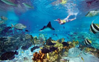 costa-rica-catamaran-a-vela-snorkeling-hotel-la-mariposa