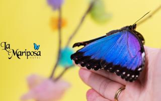 Mariposa Morpho logo