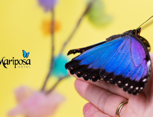 The qualities of the Morpho Blue Butterfly and its exotic beauty is what inspired the name of our hotel in Costa Rica.